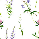 Seamless pattern with watercolor drawing flowers and herbs. Background with watercolor drawing wild flowers, seamless pattern with painted field plants, herbal Royalty Free Stock Photography