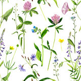 Seamless pattern with watercolor drawing flowers and herbs. Background with watercolor drawing wild flowers, seamless pattern with painted field plants, herbal Stock Photo