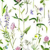 Seamless pattern with watercolor drawing flowers and herbs. Background with watercolor drawing wild flowers, seamless pattern with painted field plants, herbal Royalty Free Stock Image