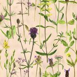 Seamless pattern with watercolor drawing flowers and plants Royalty Free Stock Photography
