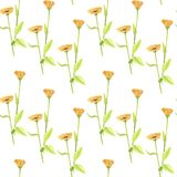 Seamless pattern with watercolor drawing flowers. Of calendula, hand drawn illustration Royalty Free Stock Photo