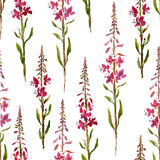 Seamless pattern with watercolor drawing flowers of willow herbs Royalty Free Stock Images