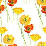 Seamless pattern with watercolor drawing flowers of yellow poppies Stock Photography