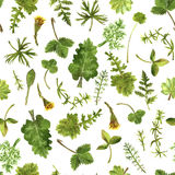 Seamless pattern with watercolor drawing herbs and leaves Stock Photo