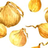 Seamless pattern with watercolor drawing onions Stock Image
