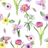 Seamless pattern with pink peony flower. Seamless pattern with watercolor drawing pink peony flowers at white background, hand drawn illustration stock photography