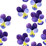 Seamless pattern with watercolor drawing violet flowers Stock Photography