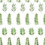 Seamless pattern of watercolor eucalyptus, fern and bay on white background. Seamless pattern of watercolor eucalyptus, fern and bay for background vector illustration