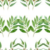 Seamless pattern of watercolor eucalyptus, fern and bay on white background. Seamless pattern of watercolor eucalyptus, fern and bay for background royalty free illustration