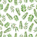 Seamless pattern of watercolor eucalyptus, fern and bay on white background. Seamless pattern of watercolor eucalyptus, fern and bay for background royalty free stock photos