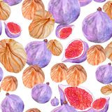 Seamless pattern with watercolor figs fresh and dried stock illustration