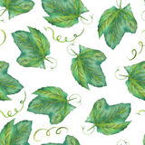 A seamless pattern with the watercolor grape leaves. Painted hand-drawn in a watercolor on a white background. Stock Photo