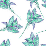 A seamless pattern with the watercolor green basil on a white background. A seamless pattern with the isolated green basil, painted hand-drawn in a watercolor on Royalty Free Stock Photos