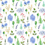 Seamless pattern. Watercolor hydrangea, currant. Stock Image