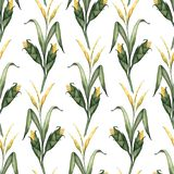 Seamless pattern with watercolor illustrations of corn stalks vector illustration