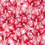 Seamless pattern with amaryllis. Seamless pattern with watercolor image of red flowers of amaryllis Royalty Free Stock Photo