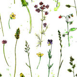 Seamless pattern with watercolor and ink drawing plants. Seamless pattern with watercolor and ink drawing wild flowers and herbs, painted field plants, color Royalty Free Stock Photo