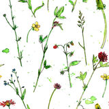 Seamless pattern with watercolor and ink drawing plants. Seamless pattern with watercolor and ink drawing wild flowers and herbs, painted field plants, color Stock Photos