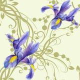 Seamless pattern with watercolor Irises Stock Photo