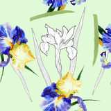 Seamless pattern with watercolor irises Stock Photo