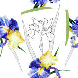 Seamless pattern with watercolor irises Stock Photography