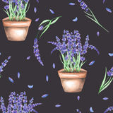 A seamless pattern with the watercolor lavender flowers in a pot Stock Photography