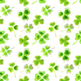 Seamless pattern with watercolor leaves of clover for your design Stock Images