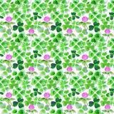 Seamless pattern with watercolor leaves and flowers of clover for design Stock Photos