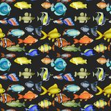 Seamless pattern with watercolor oceanic tropical exotic fishes. Hand painted on a dark background stock illustration