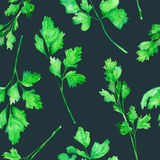 A seamless pattern with the watercolor parsley on a dark background. A seamless pattern with the isolated parsley, painted hand-drawn in a watercolor on a dark Stock Images