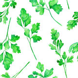 A seamless pattern with the watercolor parsley on a white background Stock Image