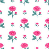Seamless pattern with watercolor peony. Vector illustration with pink flowers. Floral background for web page, wedding invitations Stock Images