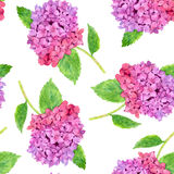 Seamless pattern with watercolor pink hydrangea Royalty Free Stock Photo