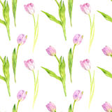 Seamless pattern with watercolor pink tulips Stock Photos
