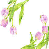 Seamless pattern with watercolor pink tulips Royalty Free Stock Images