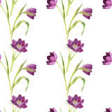 Seamless pattern with watercolor purple tulips Royalty Free Stock Photos