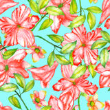 Seamless pattern with the watercolor red exotic flowers, hibiscus Stock Image