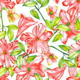 Seamless pattern with the watercolor red exotic flowers, hibiscus Royalty Free Stock Photography