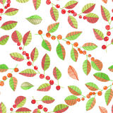 A seamless pattern with the watercolor red and orange berries on the branches with leaves on a white background Royalty Free Stock Photos