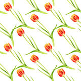 Seamless pattern with watercolor red tulips Royalty Free Stock Photo