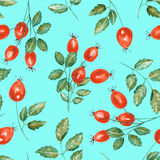 A seamless pattern with the watercolor rosehip branches Royalty Free Stock Images