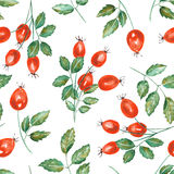 A seamless pattern with the watercolor rosehip branches Royalty Free Stock Photography