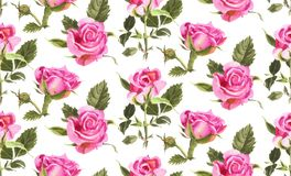 Seamless pattern with watercolor roses. Royalty Free Stock Image