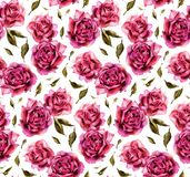 Seamless pattern with watercolor roses on white background Royalty Free Stock Photos
