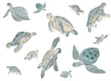 Seamless pattern with watercolor sea turtle on white background. Summer exotic print. stock illustration