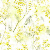 Seamless Pattern with Watercolor Sprig of Mimosa. Seamless Spring Pattern with Watercolor Sprig of Mimosa royalty free illustration