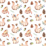Seamless pattern with watercolor squirrels, fir cones and oak acorns. Hand drawn isolated on a white background Royalty Free Stock Images