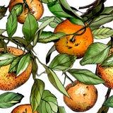 Seamless pattern, watercolor tangerines. Hand drawn illustration Royalty Free Stock Photo