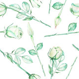 A seamless pattern with the watercolor tender green roses on a white background Royalty Free Stock Photography