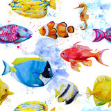 Seamless pattern with watercolor tropical fish. Seamless pattern with hand drawn watercolor tropical fish Royalty Free Stock Image